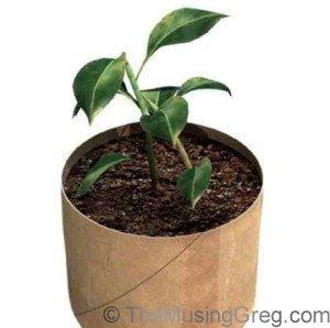main-plant-jpg
